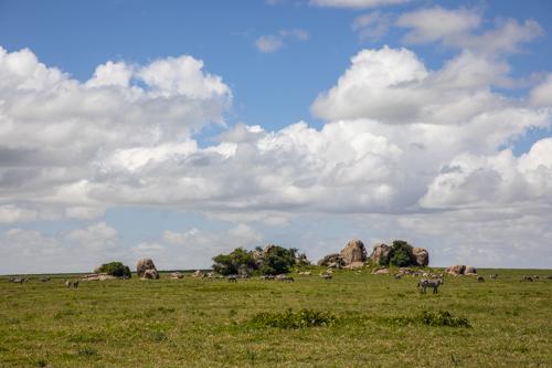 Kopje, Serengeti, Tanzania, Africa.
