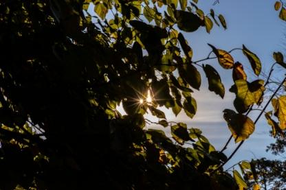 Canon EOS R, starburst, leaves, lens test